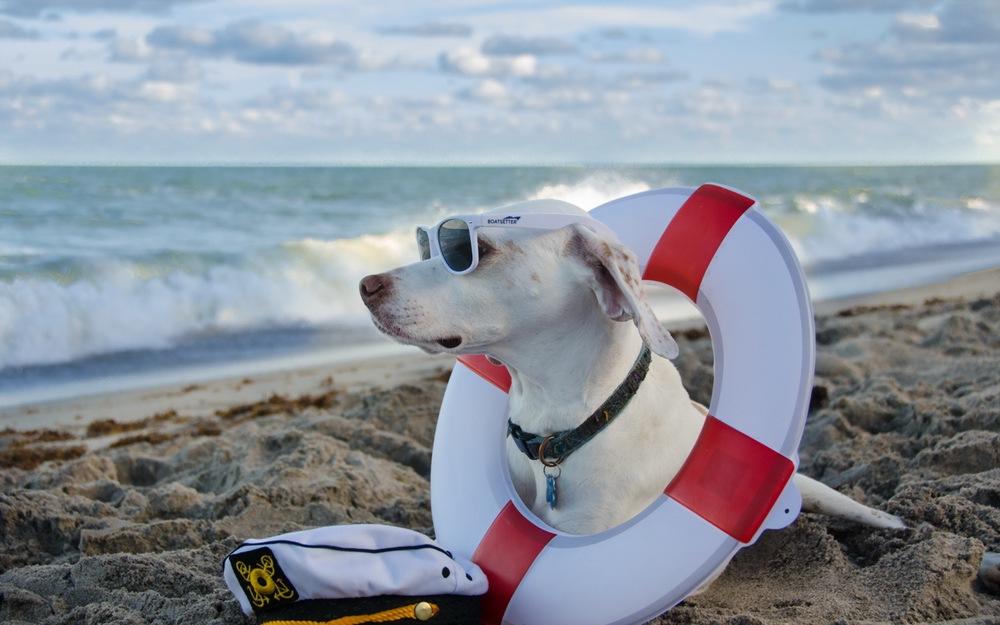 На фото – собака на пляже
