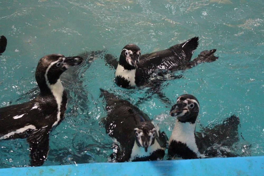 На фото – пингвинарий в Джубге